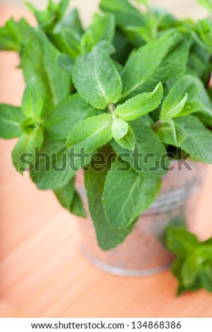 Bunch of fresh mint in pot on orange background