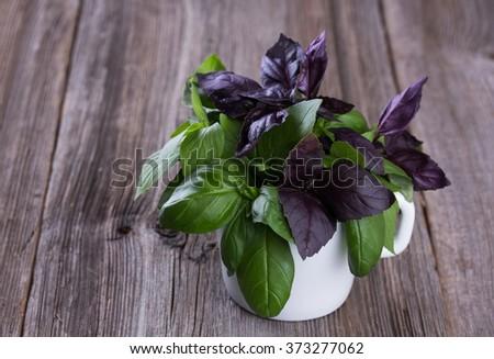 bunch of fresh organic basil in white mug. - stock photo