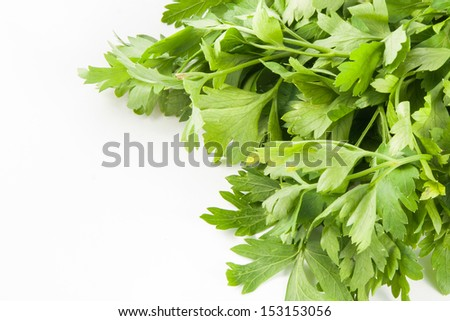 Bunch of fresh parsley isoleted on a white background