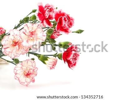 Bunch of fresh pink  flowers  isolated on white background. Space for your text. - stock photo