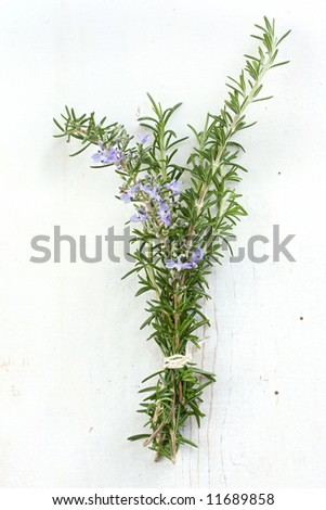 Bunch of fresh rosemary, tied with kitchen string, on rustic white timber background.  Includes rosemary flowers.