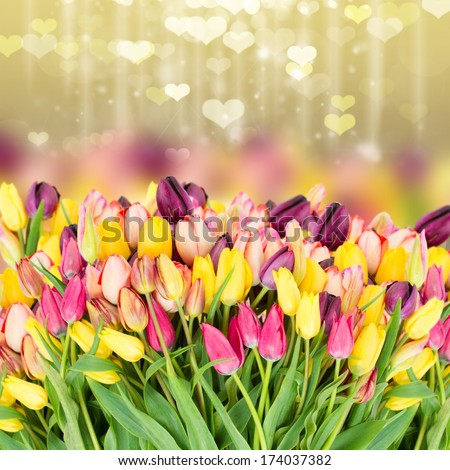 Bunch  of fresh spring  tulips flowers on festive background with hearts