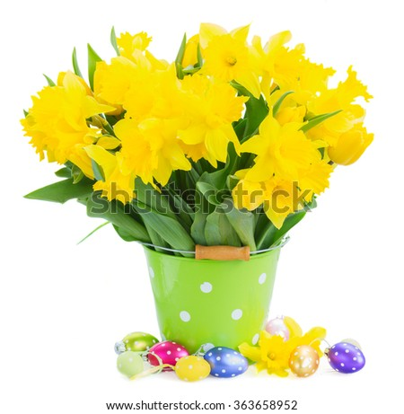 bunch of fresh spring yellow daffodils  and tulips with green leaves in pot  with easter eggs isolated on white background