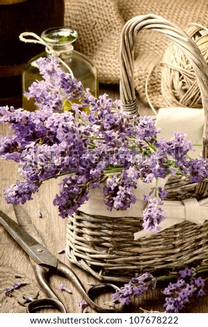 Bunch of freshly cut lavender in a basket - stock photo