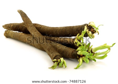 bunch of freshly harvested black salsify on a white background - stock photo