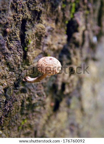Bunch of fungi grows on oak tree butt - stock photo