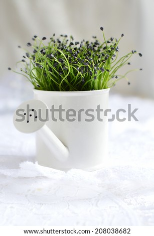 Bunch of garlic chives in miniature white watering can against a light background. Copy space. - stock photo