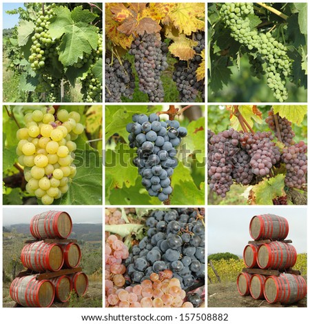 bunch of grapes  and wine barrels -  collage - stock photo