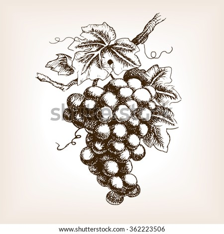 Bunch Of Grapes Sketch Style Raster Illustration Old Engraving Imitation Hand Drawn