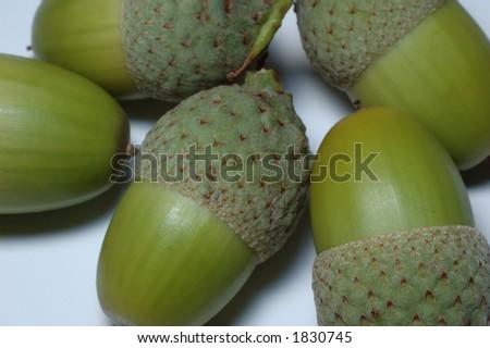 bunch of green acorns - stock photo