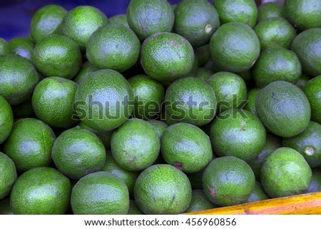 Bunch of green Avocados. One of them is opened that the stone and the pulp are visible. - stock photo