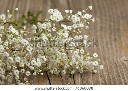 bunch of Gypsophila (Baby's-breath flowers) on old wooden table - stock photo