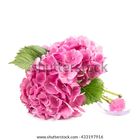 bunch of hydrangea flowers over white