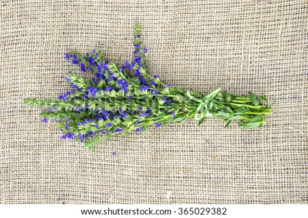 Bunch of hyssop on linen material covering table surface - stock photo