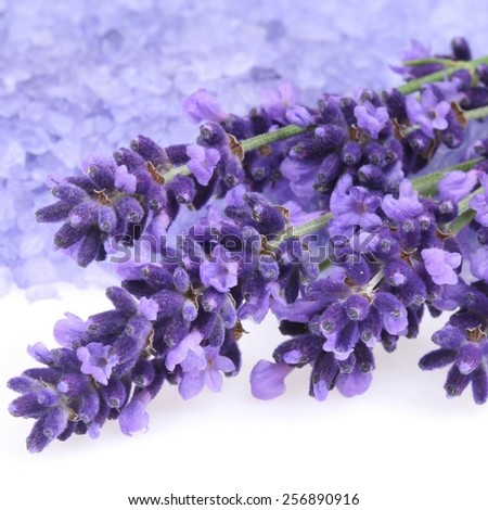 Bunch of lavender and  bath salt - beauty treatment - stock photo