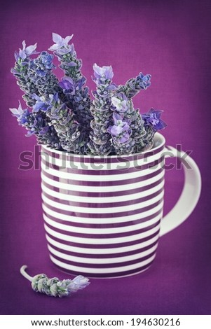 bunch of lavender flowers in a tea mug on a purple background - stock photo