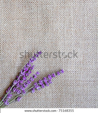 Bunch of lavender flowers on sackcloth background - stock photo