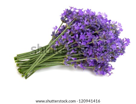 bunch of lavender isolated on white background
