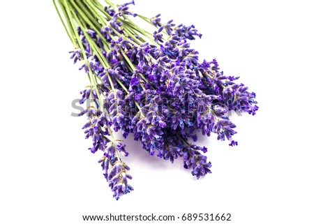 Bunch of lavender isolated on white background.