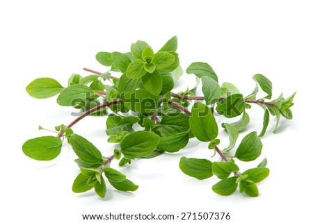 Bunch of marjoram isolated on white