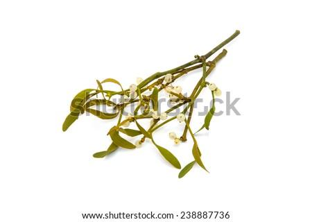 Bunch of mistletoe isolated on a white studio background. - stock photo