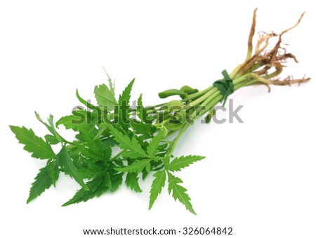 Bunch of neem plant over white background - stock photo