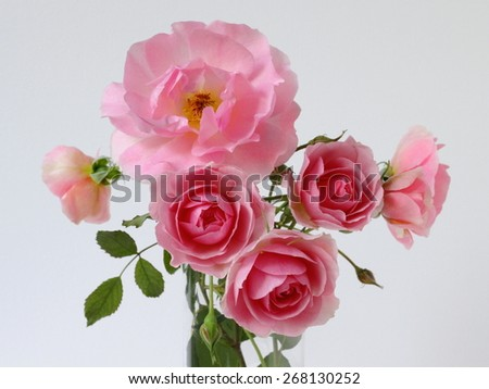 Bunch of pink roses.  - stock photo