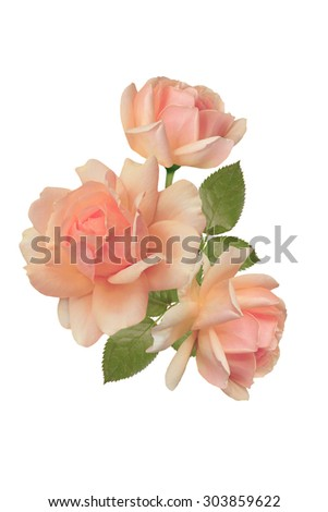 Bunch of pink roses isolated on white background - stock photo