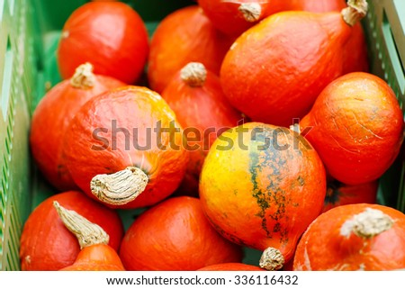 bunch of plump and juicy hokkaido pumpkins on farm or patch. Orange pumpkins for Jack o'lantern or thanksgiving - stock photo