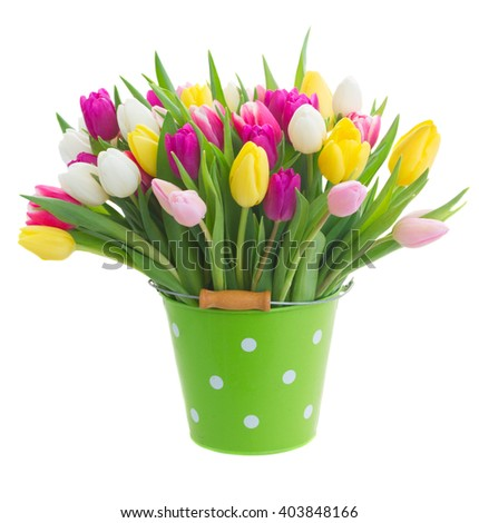 bunch of  purple, pink, yellow and white tulip flowers  in green pot isolated on white background