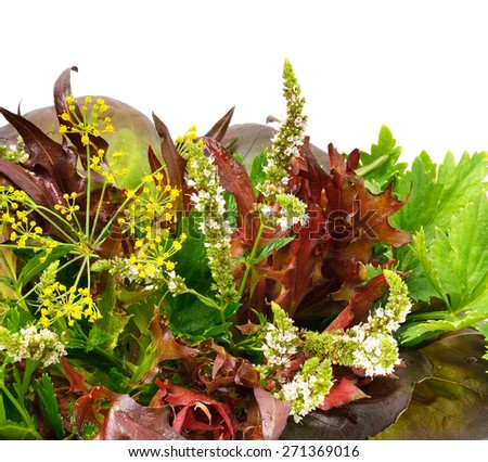 Bunch of  red and green curly lettuce, water-cress, spinach, dill, parsley, mint in the basket isolated on white - stock photo