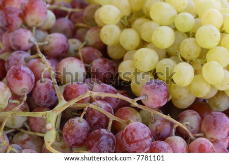 bunch of red and white grapes from aegean - stock photo