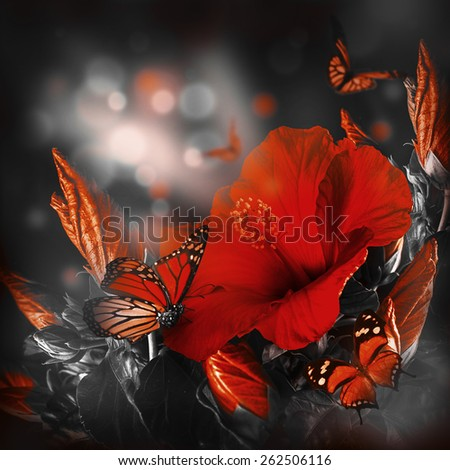 Bunch of red hibiscus and  butterfly   - stock photo