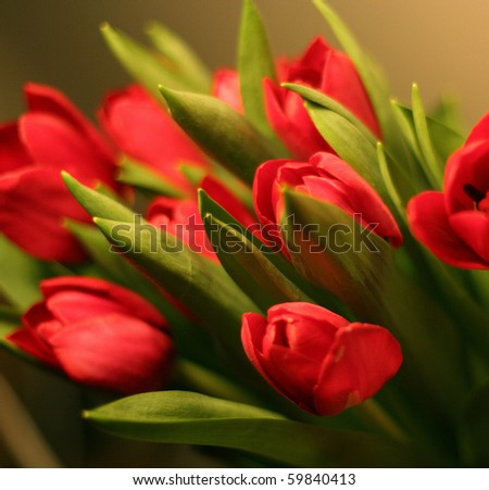 Bunch of red tulips