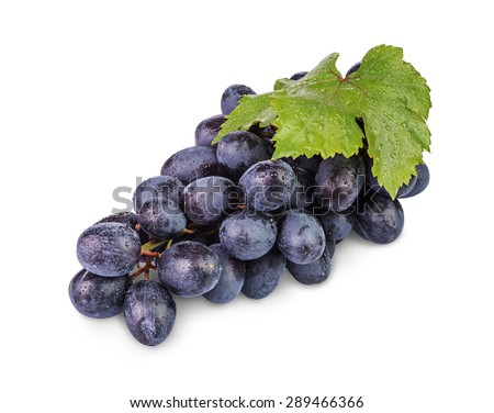 bunch of ripe black grapes with water drops isolated on  white background - stock photo