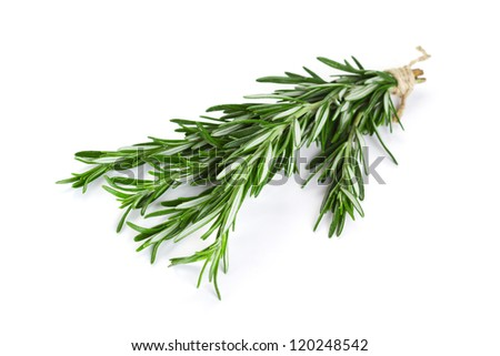 Bunch of rosemary on the white background - stock photo
