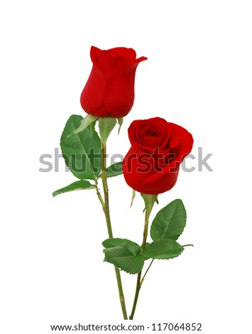 Bunch of rosy roses isolated on white - stock photo