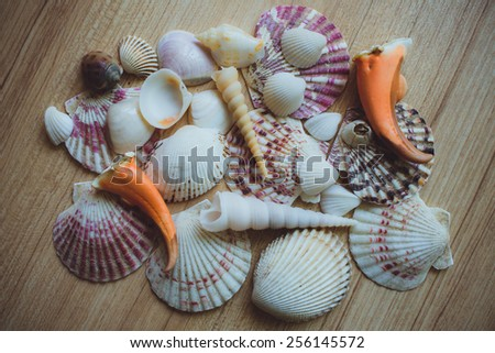 Bunch of seashells on still life. Image can be used as background. - stock photo