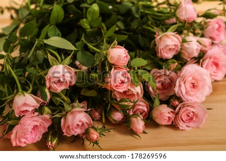 Bunch of small pink Roses.  - stock photo
