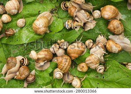 Bunch of snails - stock photo