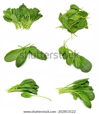 Bunch of spinach leaves on isolated white background  - stock photo