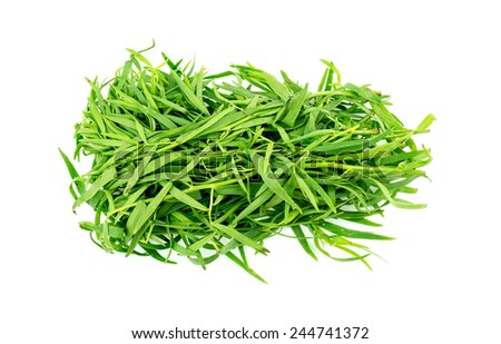 Bunch of tarragon herb leaves isolated on white - stock photo