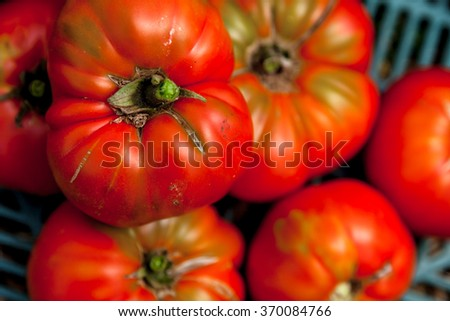 Bunch of tomatoes on a box at a farm - stock photo