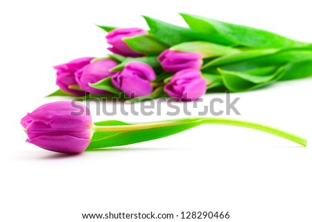 Bunch of tulips on white background, - stock photo