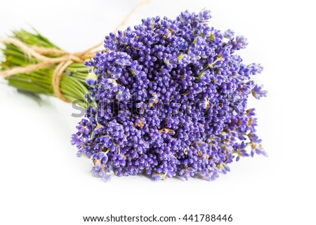 Bunch of uncultivated mountain lavender flowers on white background