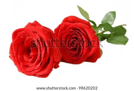 Bunch of velvet red roses isolated on white - stock photo