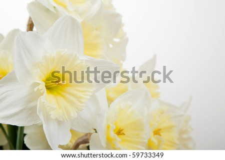 Bunch of white and yellow spring daffodils - stock photo