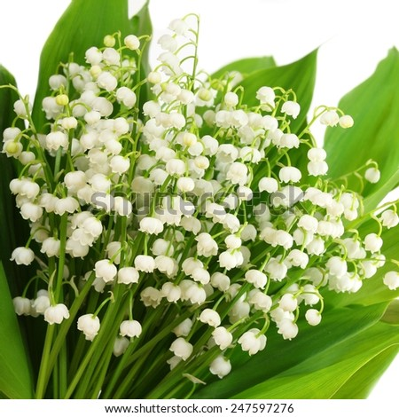 Bunch of white lilies. Lily of the valley. - stock photo