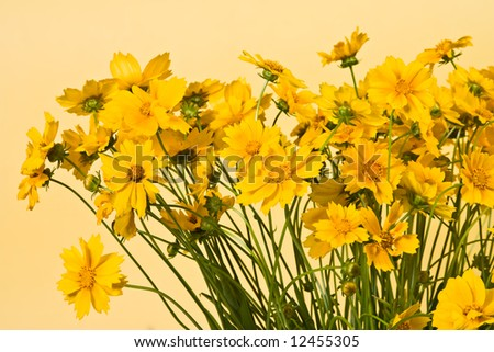 Bunch of yellow flowers on the yellow background