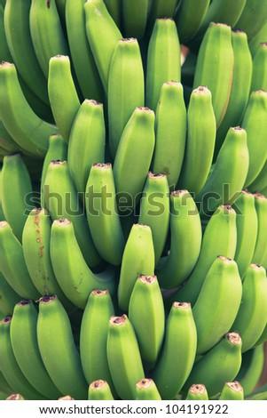 bunch of young green bananas - stock photo